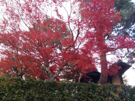 http://www.kyotominsai.co.jp/mblog/uploadimg/%21cid_15fed7bb523ea2c1b2e2.jpg