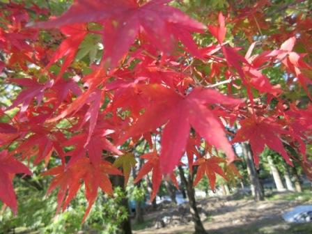 http://www.kyotominsai.co.jp/mblog/uploadimg/-0.JPG