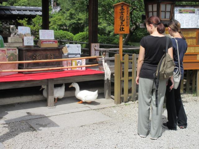 http://www.kyotominsai.co.jp/mblog/uploadimg/IMG_2246.JPG