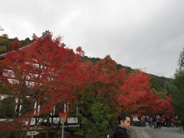 http://www.kyotominsai.co.jp/mblog/uploadimg/IMG_2621.JPG