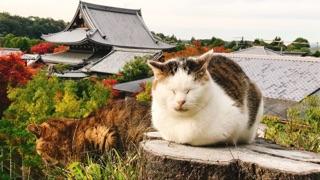 http://www.kyotominsai.co.jp/mblog/uploadimg/attachment03.jpg