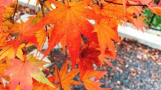 http://www.kyotominsai.co.jp/mblog/uploadimg/i.jpg